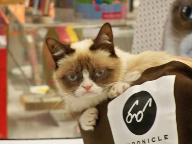 Grumpy Cat at the Book Expo in NYC, 2013