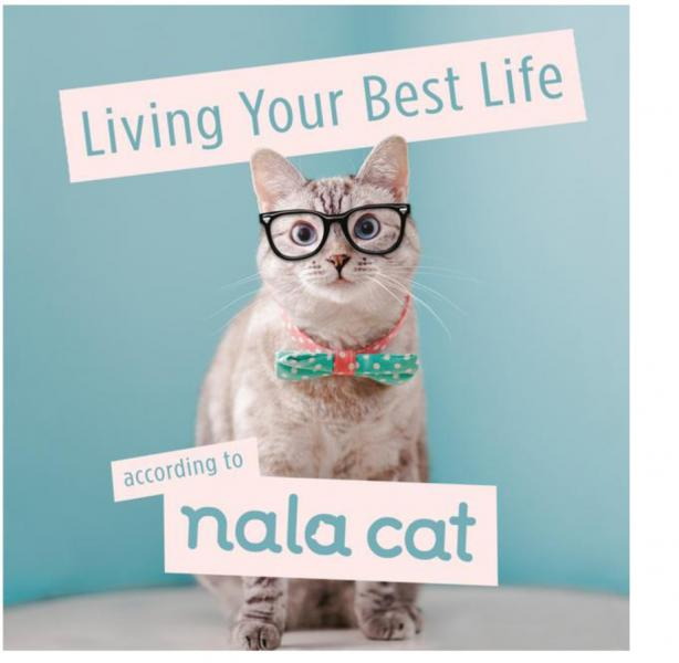 Nala Cat's Guide to Living Your Best Life