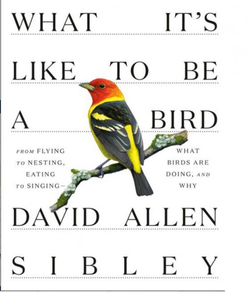 What It's Like to Be a Bird by David Sibley